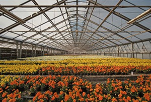 Nursery and Greenhouse Insurance in Moultrie, Valdosta, Tifton, Sylvester, and Albany, GA